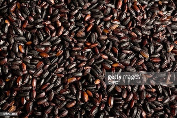 Black rice, close-up (still life, full frame)