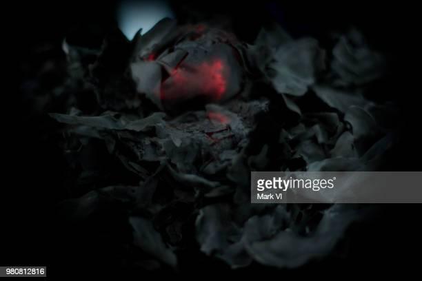 black rose death - 灰 ストックフォトと画像