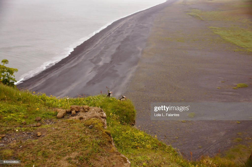 Black sand beach and birds : Foto de stock