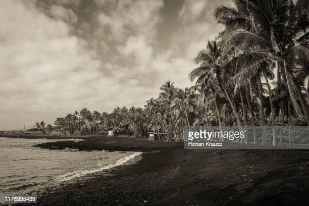 black sand beach hawaii - punalu'u_beach stock pictures, royalty-free photos & images