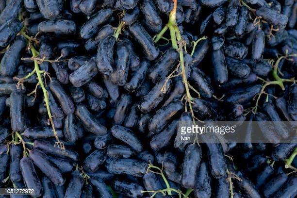 black seedless moon drops grape or witch fingers grape, long red graoe - mini moon stock pictures, royalty-free photos & images