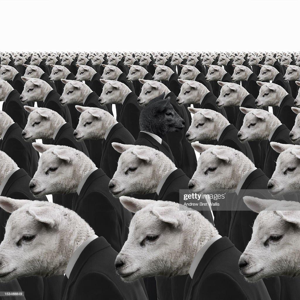 Black sheep amongst white sheep businessmen : Stock Photo