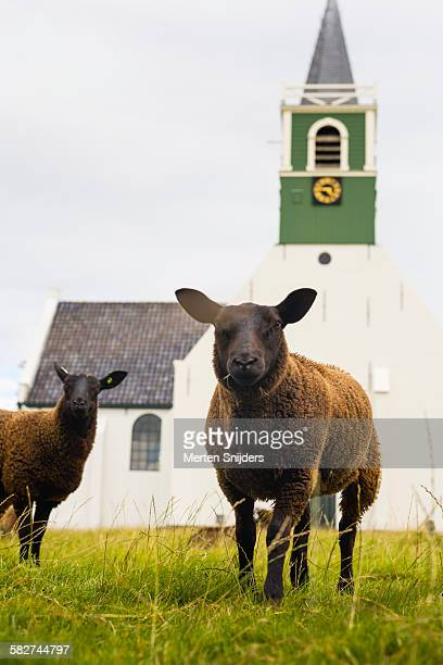 Black sheep in front of village church