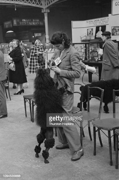 Black Standard Poodle in the continental clip, with its owner at Crufts dog show, held at the Grand Hall, Olympia, London, 8th-9th February 1952....