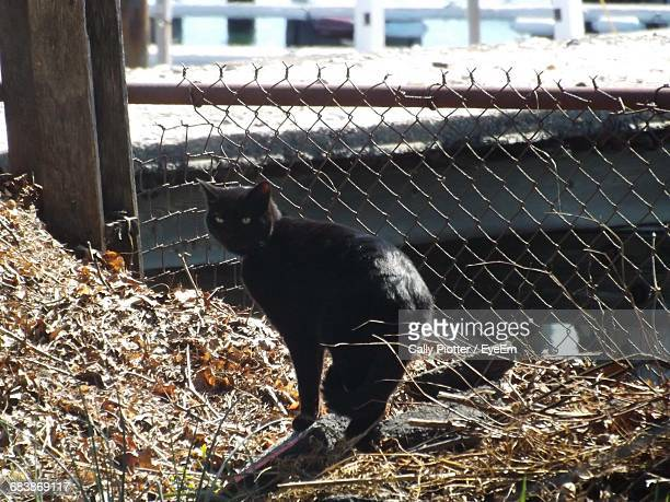 black stray cat sneaking on building roof - black siamese cat stock pictures, royalty-free photos & images