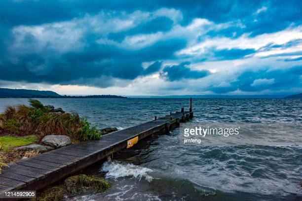black swan on the lake rotorua, new zealand - north island new zealand stock pictures, royalty-free photos & images