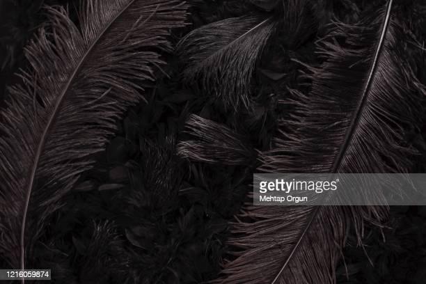 black swan - animal wing ストックフォトと画像