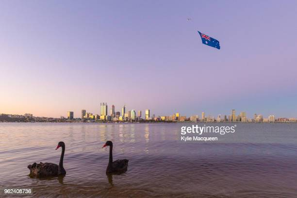 black swans in front of the australian flag, perth western australia - australia day stock pictures, royalty-free photos & images