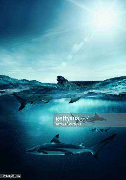 black tip sharks - shark stock pictures, royalty-free photos & images