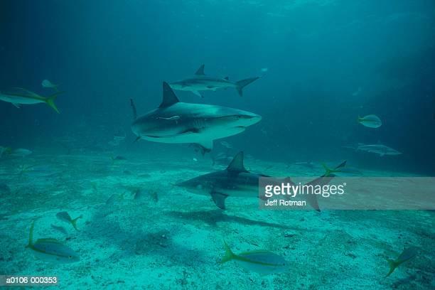 black tip sharks - fondo marino fotografías e imágenes de stock