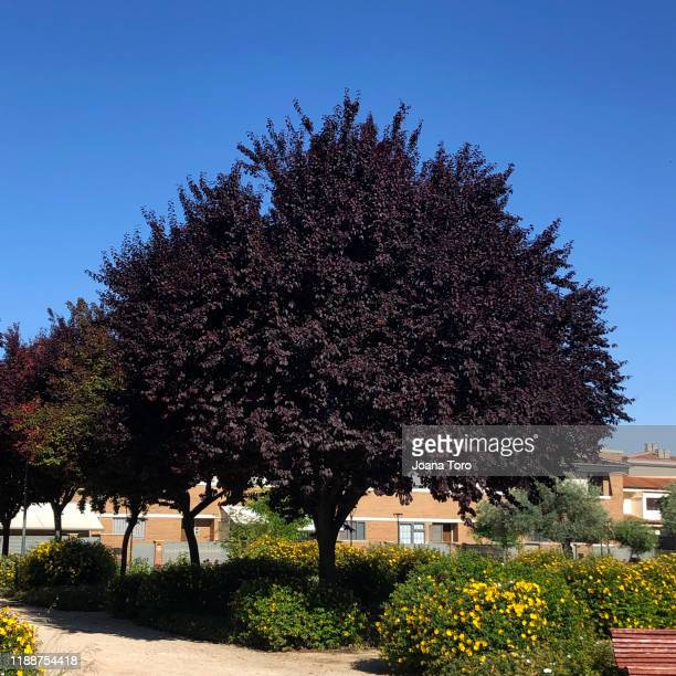 black tree-conceptual nature - joana toro stock pictures, royalty-free photos & images