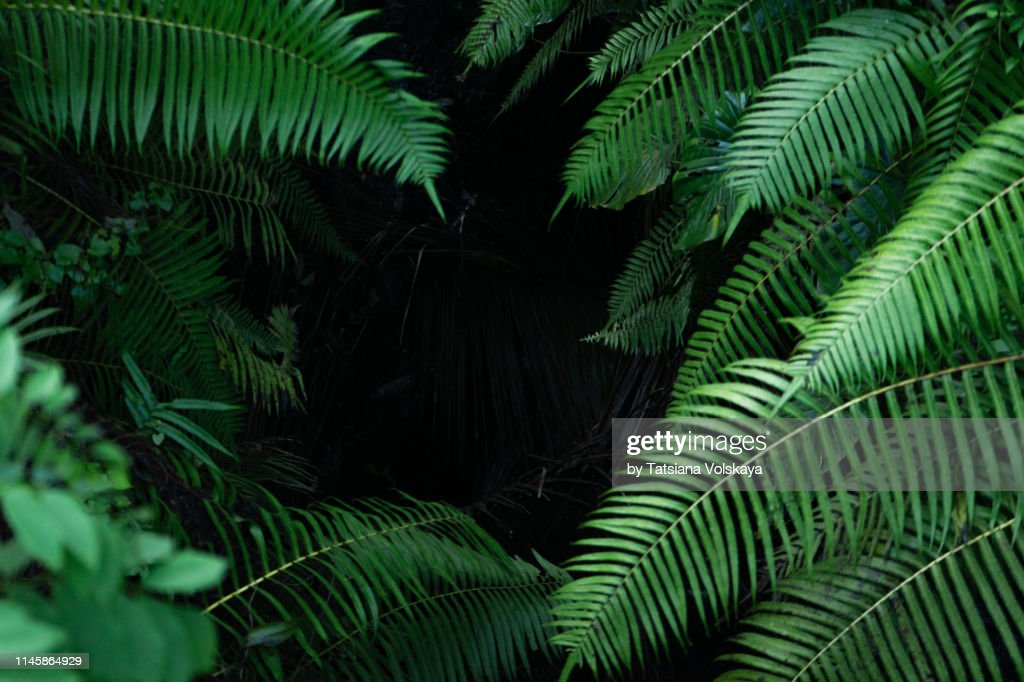 Black tropical background with green plants close-up view after rain. : Stock Photo