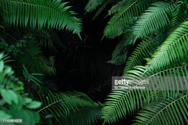 black tropical background with green plants close-up view after rain. - ramo parte della pianta foto e immagini stock