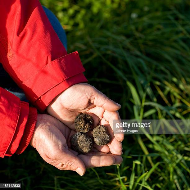 Black truffles on hands