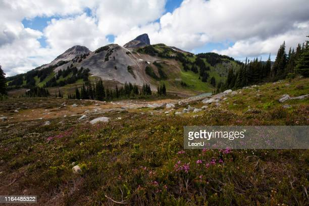 black tusk in summer, bc, canada - tusk stock pictures, royalty-free photos & images
