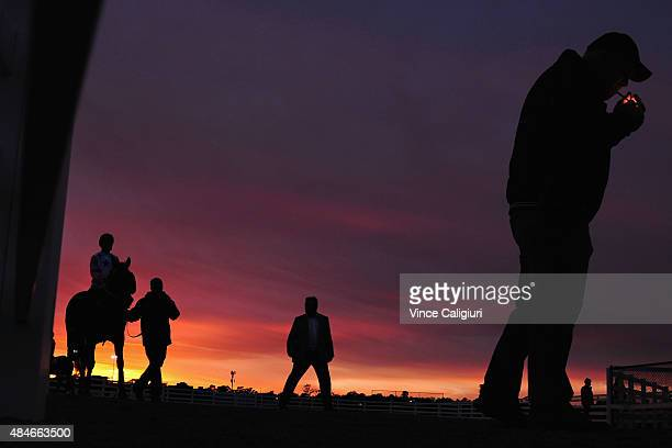 Black Vanquish from the Tommy Hughes stable walks out to contest heat two as the sun rises in the distance during jump out sessions at Flemington...