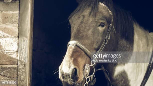 Black & white horse Power horse 1