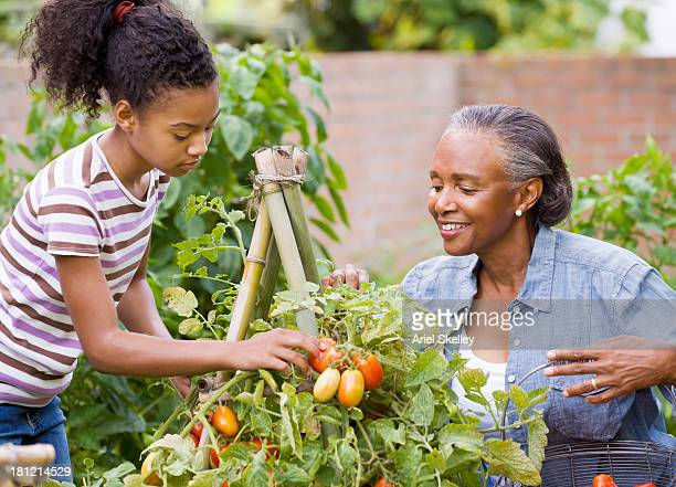 black woman and granddaughter picking fruit - black photos et images de collection