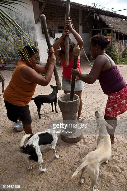 Black women pounding rice grain in wooden mortar at Agrovila Maruda a Quilombo in Alcantara Maranhao State Northeastern Brazil A quilombo is a...