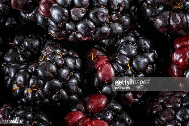 blackberries abstract - ian gwinn stock pictures, royalty-free photos & images