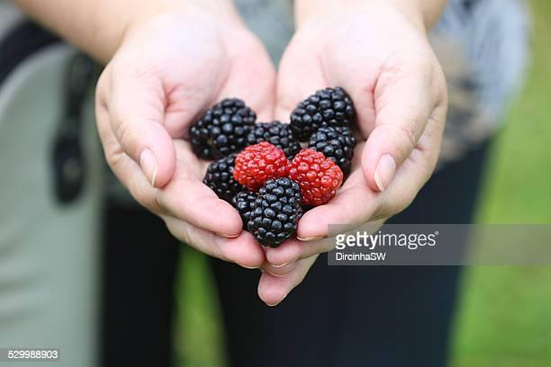 Blackberries - Amoras