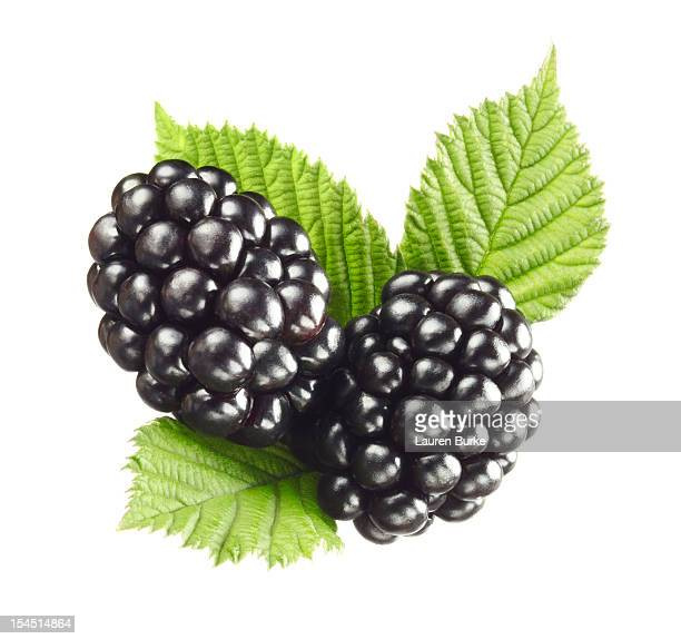 blackberries on leaves - blackberry fruit stock pictures, royalty-free photos & images
