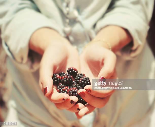 blackberries - sara mora fotografías e imágenes de stock