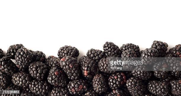 Blackberry Fruit, Fresh Food Bottom Border Frame on White Background