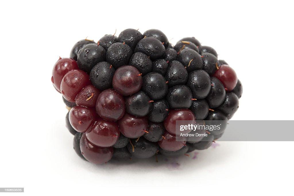 Blackberry isolated on white : Foto de stock