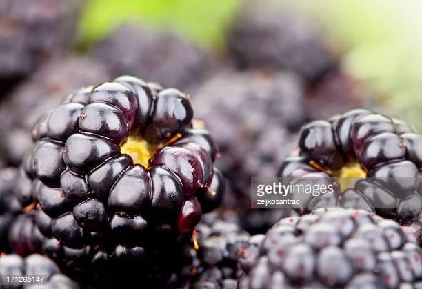 O Blackberry