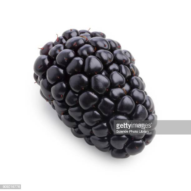 blackberry - blackberry fruit stock pictures, royalty-free photos & images