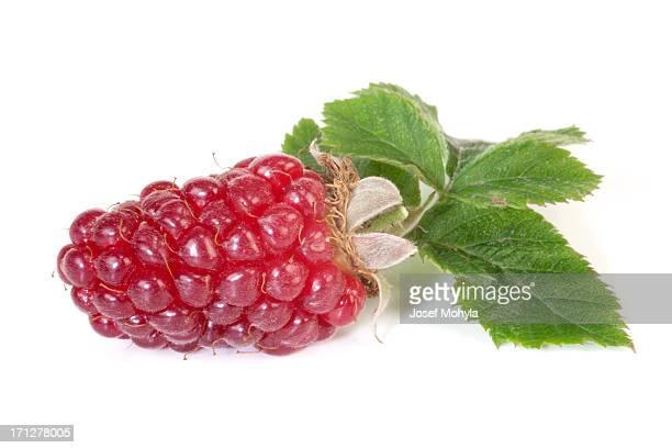 Blackberry-Tayberry