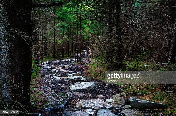 blackbird knob trail - monongahela national forest stock photos and pictures