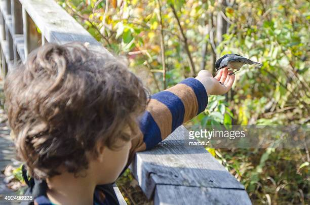 Black-capped Chickadee in little boy's hand