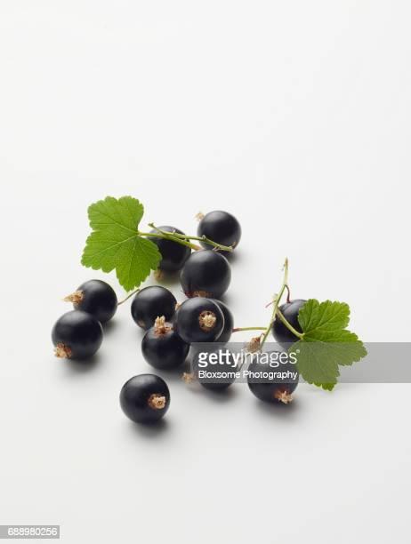 blackcurrants - johannisbeere stock-fotos und bilder