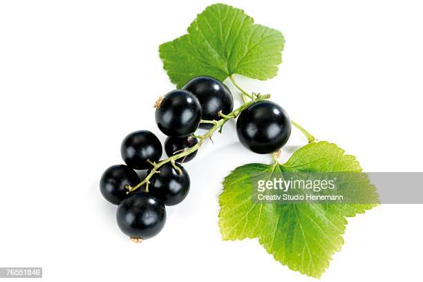 Blackcurrants with leaf, close-up