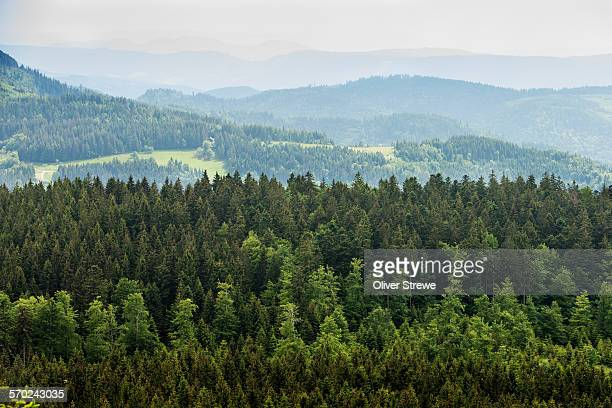 blackforest - baden württemberg stock pictures, royalty-free photos & images