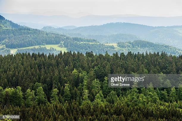 blackforest - baden württemberg stock-fotos und bilder