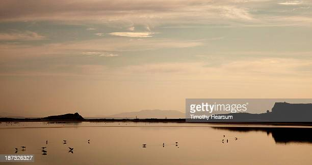 black-necked stilts in water at sunset - timothy hearsum imagens e fotografias de stock