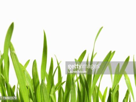 grass blade close up. Similar Images Grass Blade Close Up