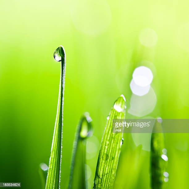 blades of grass - easter sunrise stock pictures, royalty-free photos & images