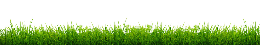 Blades of Green Grass Isolated on a white background. 926178452