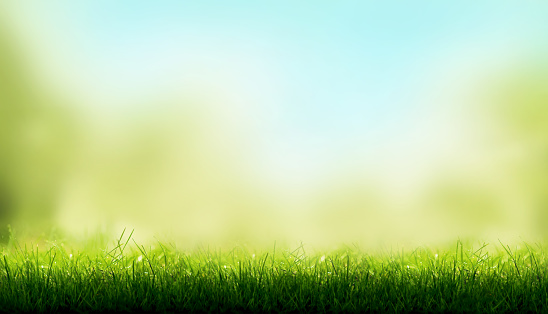 Blades of Green Grass with a blurred sky blue and green garden foliage background. 926715210