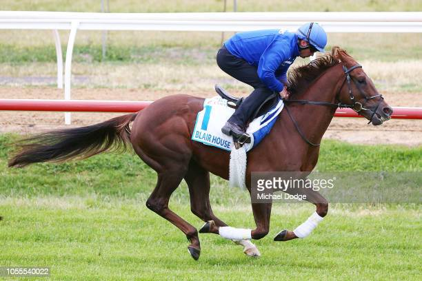 Blair House gallops during a Werribee trackwork session at Werribee Racecourse on October 31 2018 in Melbourne Australia