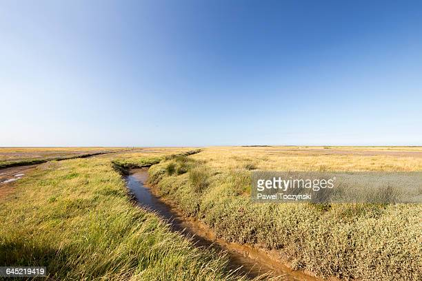 blakeney national nature reserve - nature reserve stock pictures, royalty-free photos & images