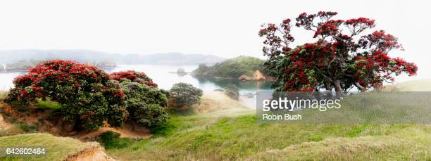Bland Bay early misty morning, New Zealand