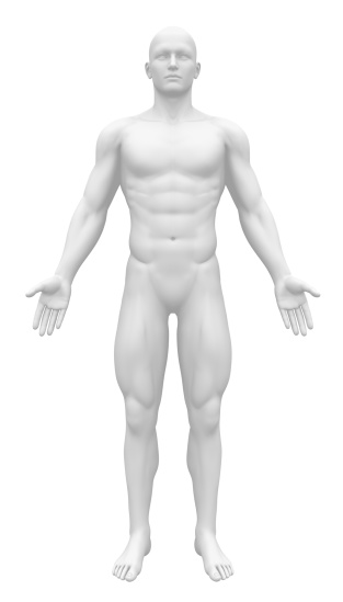 Blank Anatomy Figure - Front view 182137787