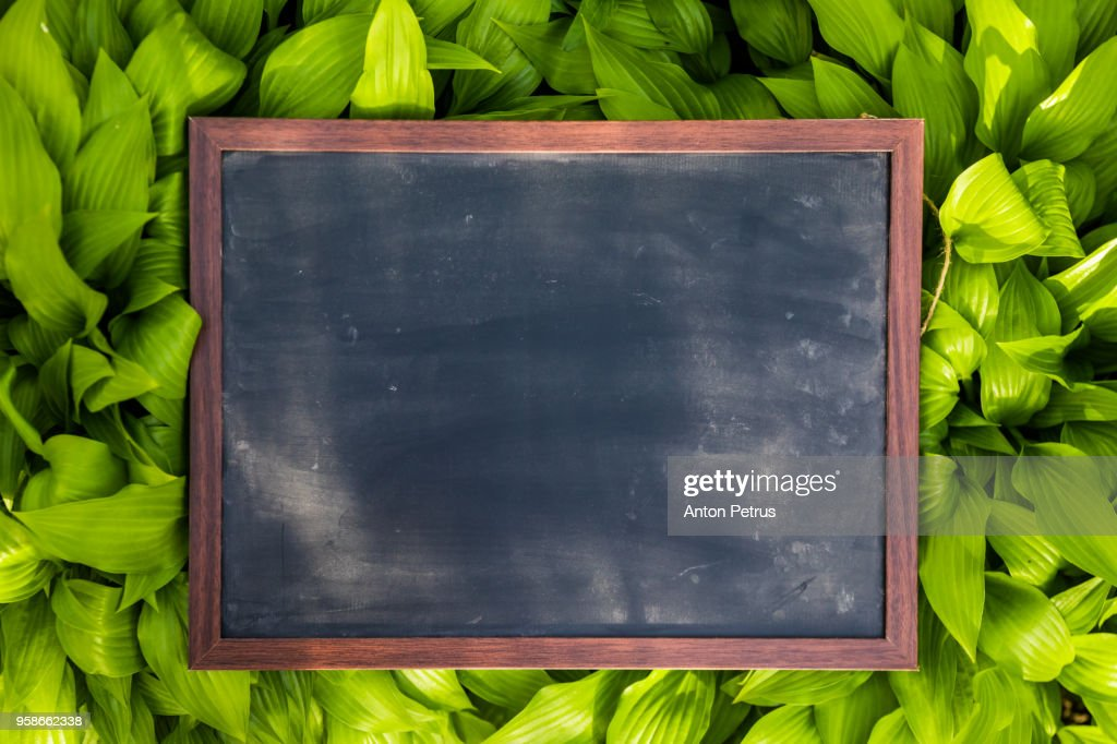 Blank blackboard with wood border frame on grass : Stock Photo