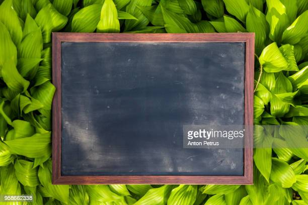 Blank blackboard with wood border frame on grass