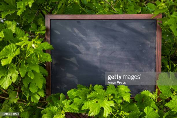 Blank blackboard with wood border frame on the background of grape leaves